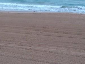 La nostra platja ja espera la temporada d'estiu